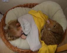 neulich im Katzenkorb
