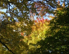 Herbstlaub (2)