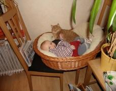 im Katzenkorb