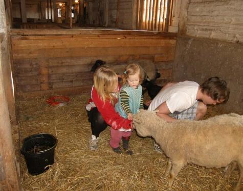 im Schafstall