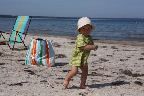 kleiner Strandhase auf Erkundung