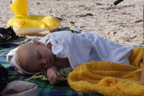 kleiner Strandhase schläft