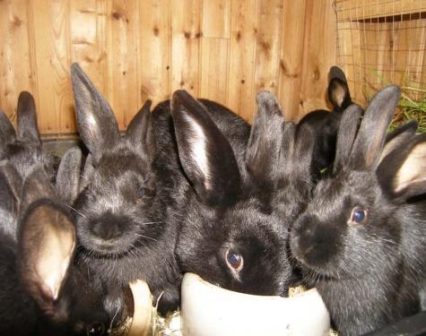 so viele schwarze Ohren!