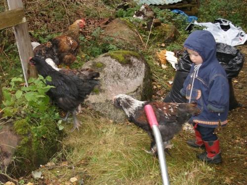 Jonathan und Hühner