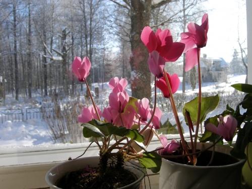 die ersten Blumen...