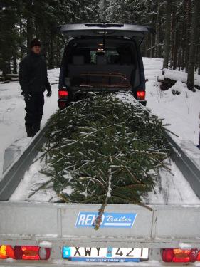 Unternehmen Weihnachtsbaum 2
